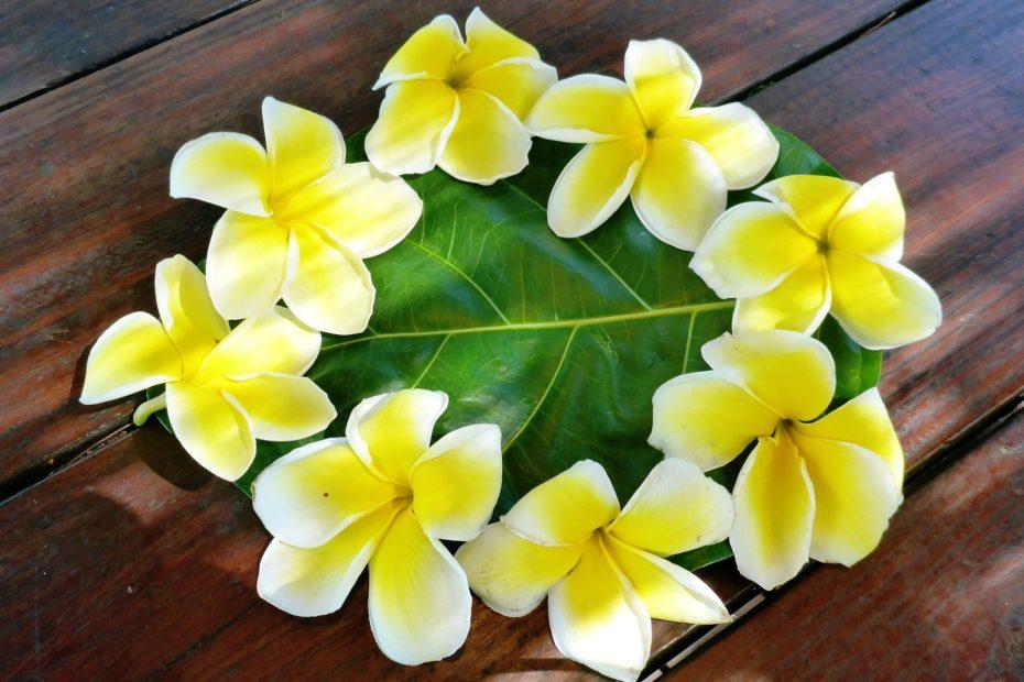 fleur- tiaré - polynésie