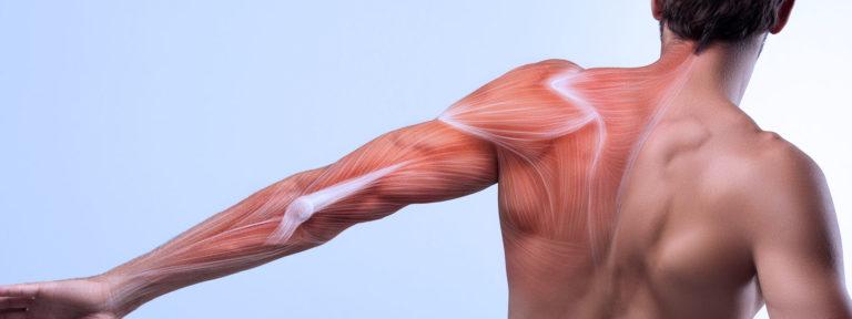 Fascias - homme - dos - article - France massage